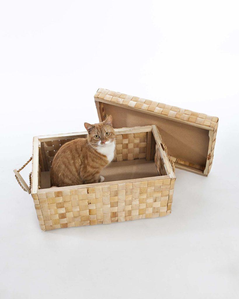 cat sits in a box